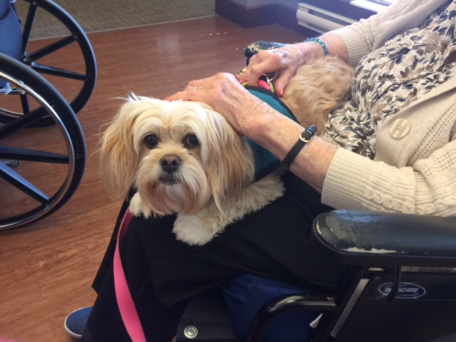 Therapy dog on an older woman's lap